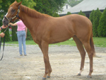 Two-year-old Ahvee's Destiny at Linda Rice Stables.