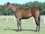 Arielle's Song 2007, when she was a yearling